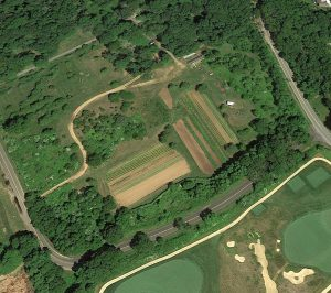 quail farm